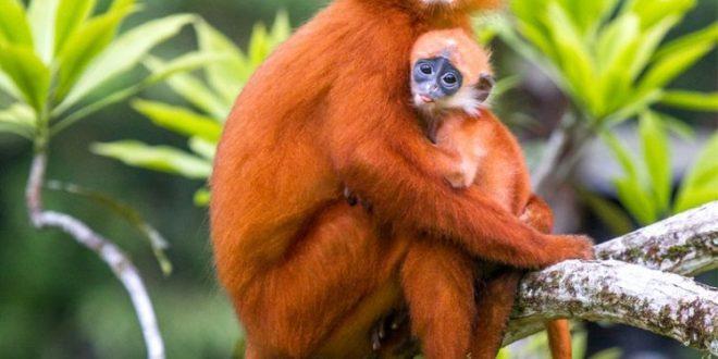 "Jelajah Hutan dan Sungai Bertajuk ""Ekspedisi Susur Sungai 2017"" Di Kalimantan Tengah"