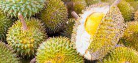 Peneliti Singapura Petakan DNA Durian