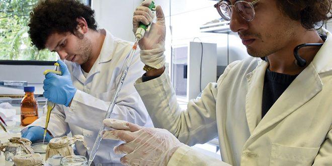 Peneliti Indonesia mengembangkan obat HIV dari daun endemik Asia