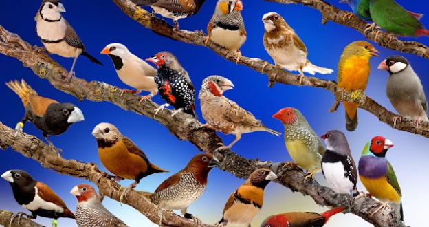 Peneliti Temukan Bulu Burung Bisa Lacak Polusi Udara
