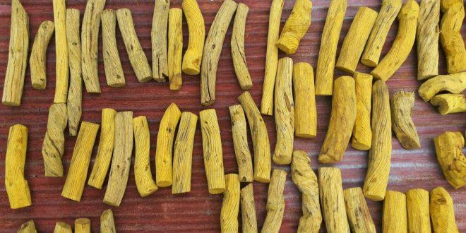 Khasiat Akar Kuning Kalimantan Untuk Kesehatan