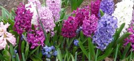 Peneliti Temukan Senyawa di Bunga yang Wangi Bisa Atasi Kebutaan