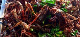 Kaya akan Nutrisi, Inilah Mengapa Peneliti Menyarankan Kita Makan Serangga